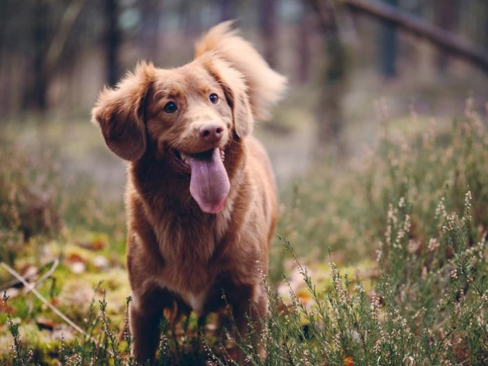 pet dog in nature
