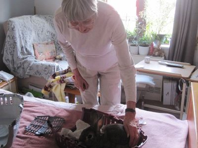 rabbit visit at Bay Tree Court Care Home